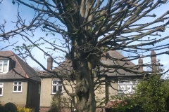 Hornbeam-122-Ferndene-Road-SE24-160415-after2