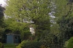 Hornbeam122-Ferndene-Road-SE24-160415-before