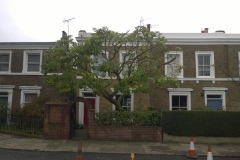 Magnolia-74-Claylands-Road-SE11-141014-after-1