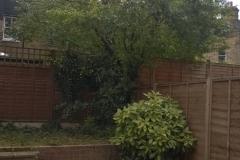 Prunus-domestica-31-Jennings-Road-SE22-210515-after