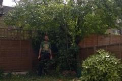 Prunus-domestica-31-Jennings-Road-SE22-210515-during