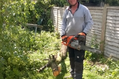 Ralph-delimbing-a-small-plum-tree-210515-Streatham-e1457101869323