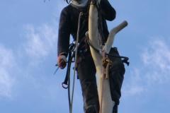 Robert-at-the-top-anchor-point-of-a-eucalyptus-e1459757129630
