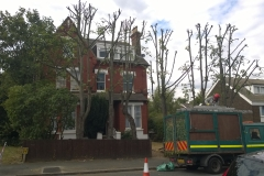 Row-of-limes-1-Warminster-Road-SE25-230715-after-1