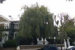 Willow-22-Wimbledon-Park-Road-SW19-150915-before