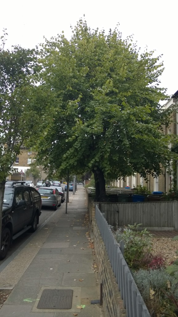 2 x Limes, 100 Denmark Road SE5, 261114, before side view