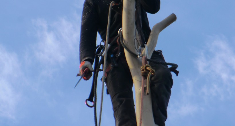 Dismantling a Eucalyptus